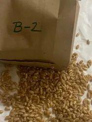 Organic Natural Wheat