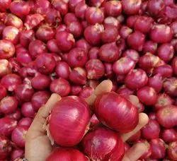 A Grade Maharashtra Onion, Packaging Size: 50 Kg, Onion Size Available: Medium