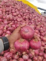 A Grade Maharashtra Natural Onion, Packaging Size: 50 Kg, Onion Size Available: Large