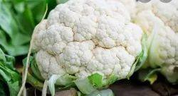 A1 White fresh Cauliflower