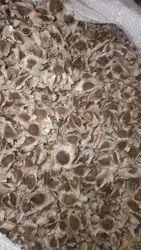 Drumstick Seeds Moringa