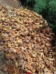 A Grade Solid Natural Husked Coconut, Packaging Size: Load, Coconut Size: Medium