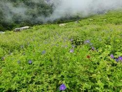 Joshimath,Uttarakhand Valley Of Flowers