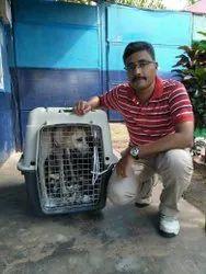 Pet Transportation Chennai