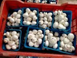 Organic Chhattisgarh Button Mushroom, Packaging Type: Packet, Packaging Size: 200gm