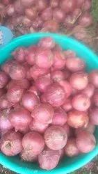 Pune and Ahmednagar Onions A Grade Onion, Packaging Size: 50 Kg, Onion Size Available: Medium