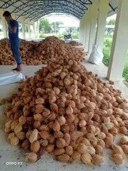 A Grade Solid Semi Husked And Fully Husked Coconuts
