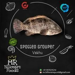Spotted Grouper, 2 Years, Size: 2 To 5 kg