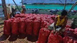 A Grade Maharashtra Onion, Gunny Bag, Packaging Size: 50 Kg
