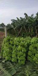 A Grade Fresh Raw Banana fruit (Charotar G9) Top quality, Packaging Type: Carton, Packaging Size: 20 Kg