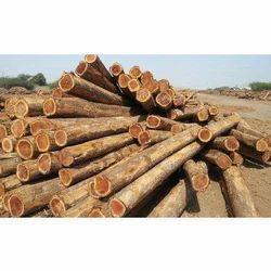 African Teak Wood Log