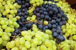 Green Fresh Grape