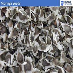 Moringa Oleifera Seeds For Planting