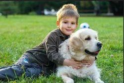 Dog Hostel Services
