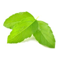 Tulsi Leaves Dried
