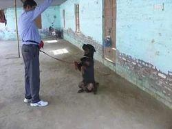 Impression Dog Training