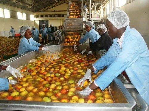 Standard Mango Processing Plant, Automatic Grade: Semi-Automatic