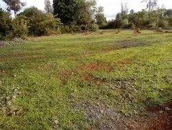Plot Land 5 Guntha