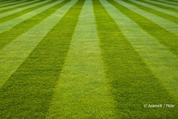 Sports Surfacing Artifical Grass