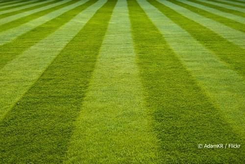 25 mm Artificial Green Grass