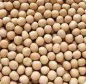 Prakash White Pea Seed