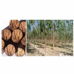 Biomass Cultivation Briquette Making Service