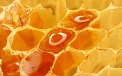 Shudh Neem Honey