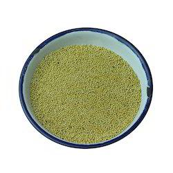 Rj 23 50 Kg Bold Mustard Seeds