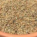 Millet Pearl Seeds, Packaging Type: Pp Bag, Packaging Size: 5-10kg