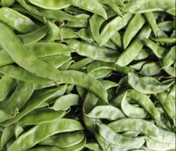 Dolichus Bean Kokan Bhusan Seeds
