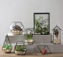 Glass Terrarium Box