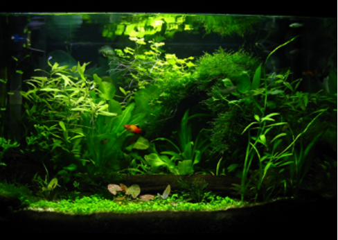 Natural Garden Aquarium