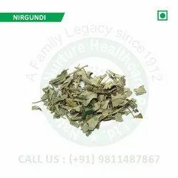 Nirgundi (Vitex Negundo, Chinese Chastetree, Sinduar, Sambhalu, Panjangusht, Nagod, Lakkigida)