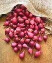 Small Onion (Sambar Onion)