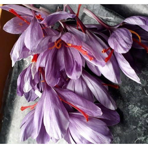 Fresh Flower Saffron Petals