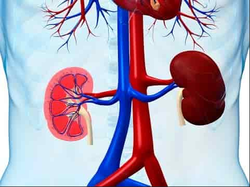 Kidney Function Tests