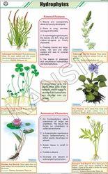 Hydrophytes  For Botany Chart
