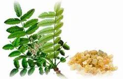 90% Akba 40% Boswellia Serrata Extract