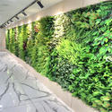 Artificial Green Wall Installation Service
