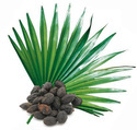 Saw Palmetto 25% Extract