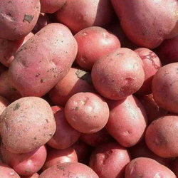 Organic Fresh Red Potatoes, Packaging: PP Bag