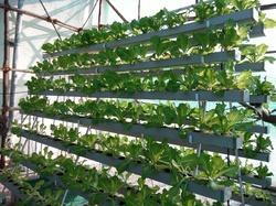 Commercial Hydroponics NFT System