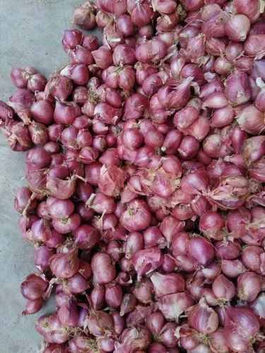Small Onion - Indian Fresh Onion Exporter from Madurai