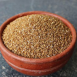 Indian KODO Millet upolished, Gluten Free
