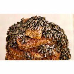 Honey Bee Management Service