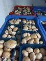 Pan India Portabello Mushroom, Packaging Type: Plastic Bag
