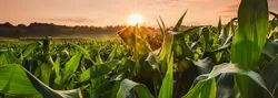 Agricultural Insurance Services