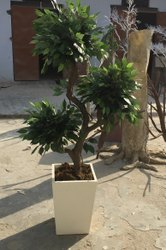 Artificial 3 in 1 Ficus Tree