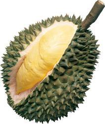 Organic Durian Fruit