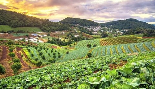 DAS Organic Plantations & Farming, Packaging Type: Corrugated Box